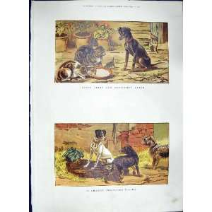 1886 COLOUR PRINT GUARD DOGS CATS PETS ANIMALS MILK