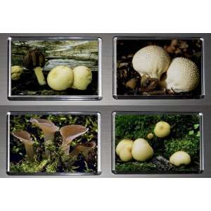 Boxed Set of 4 Fridge Magnets Fungus Mushrooms 5
